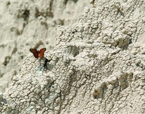 Butterfly messenger